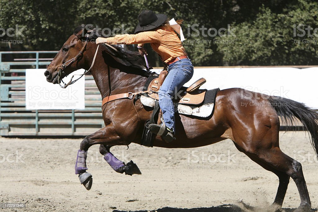 Horse in Gallop stock photo