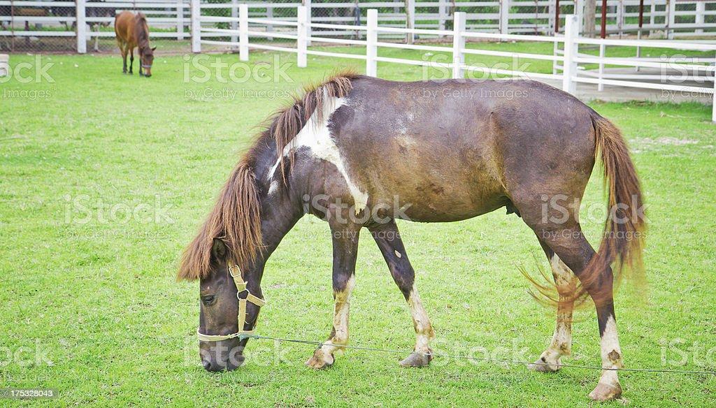 horse in green field farm royalty-free stock photo