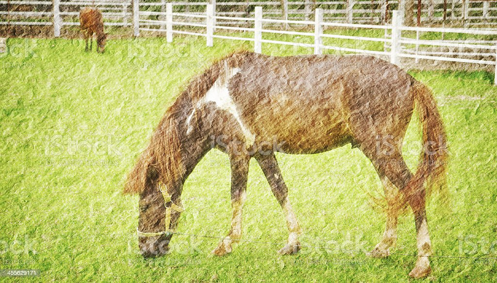 horse in green field farm royalty-free stock photo