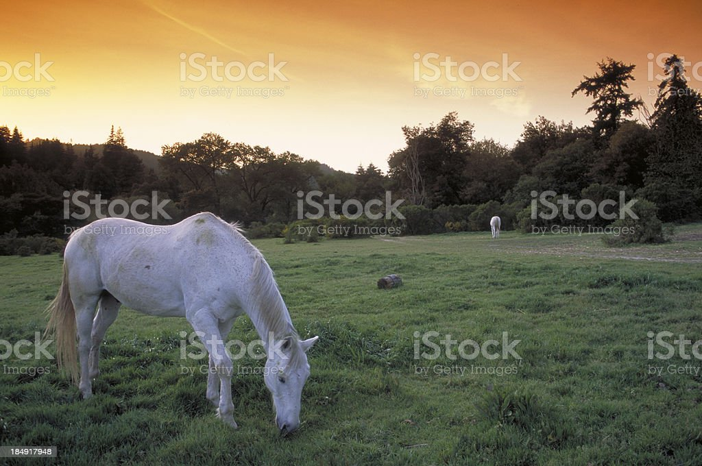 Horse in Meadow royalty-free stock photo