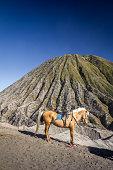 Horse in Mount Bromo Indonesia