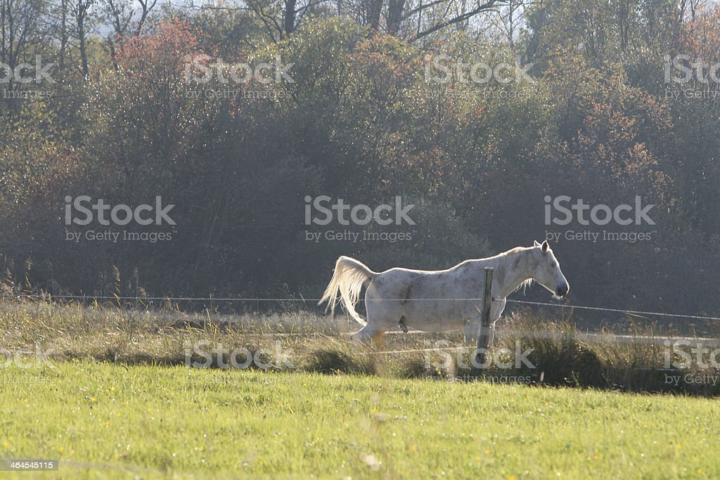 horse in Murnauer Moos stock photo