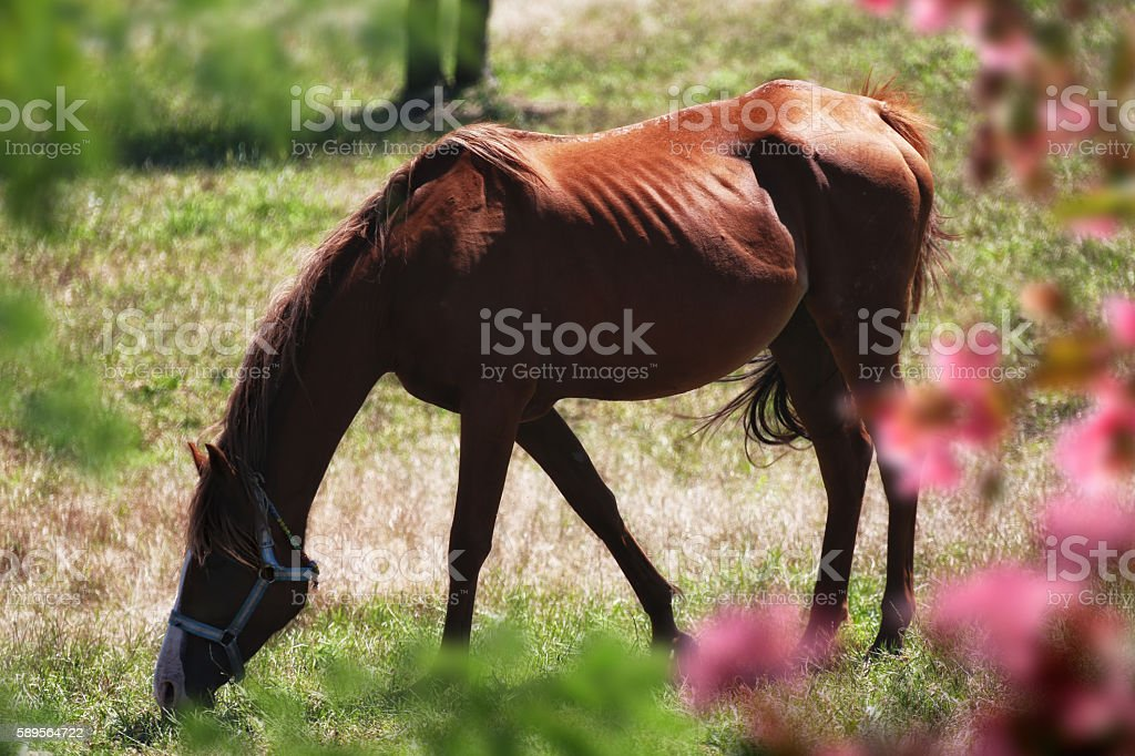 horse in nature stock photo