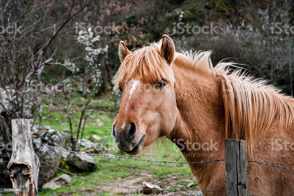 Horse in paddock stock photo