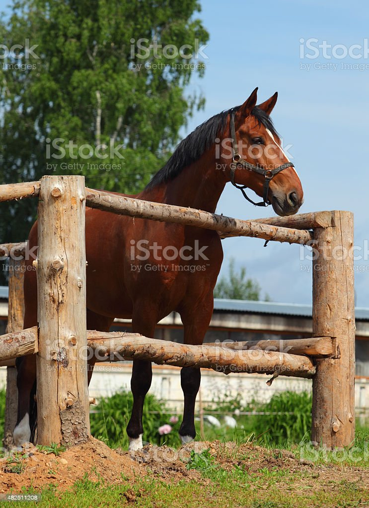 Horse in paddock stud farm stock photo