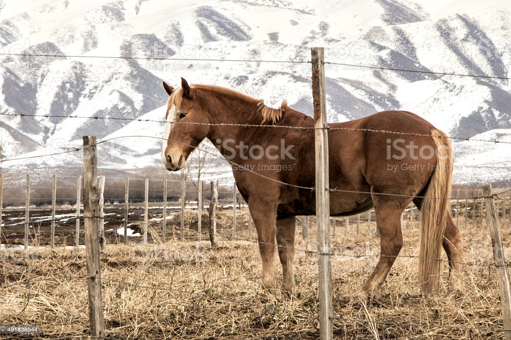 Horse in Patagonia stock photo