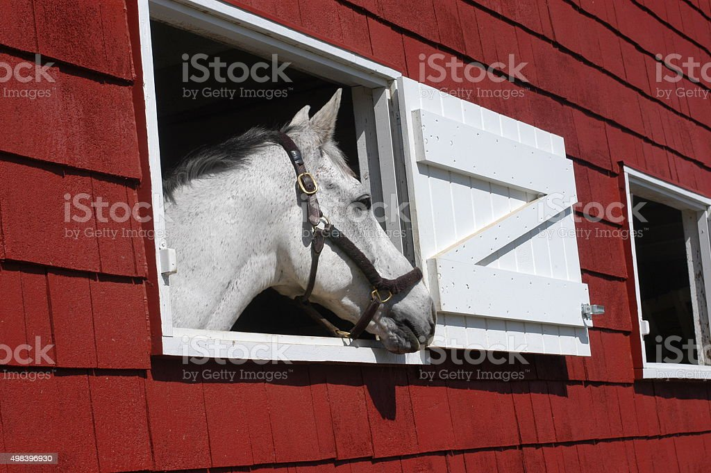 Horse in red barn window stock photo