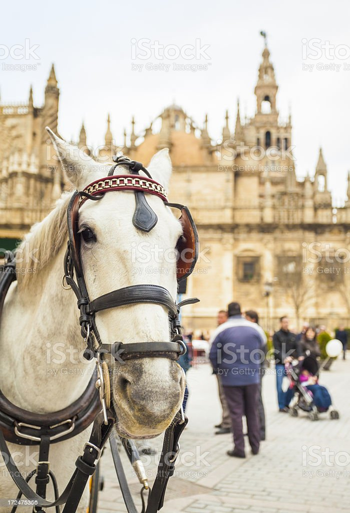 Horse in Seville royalty-free stock photo