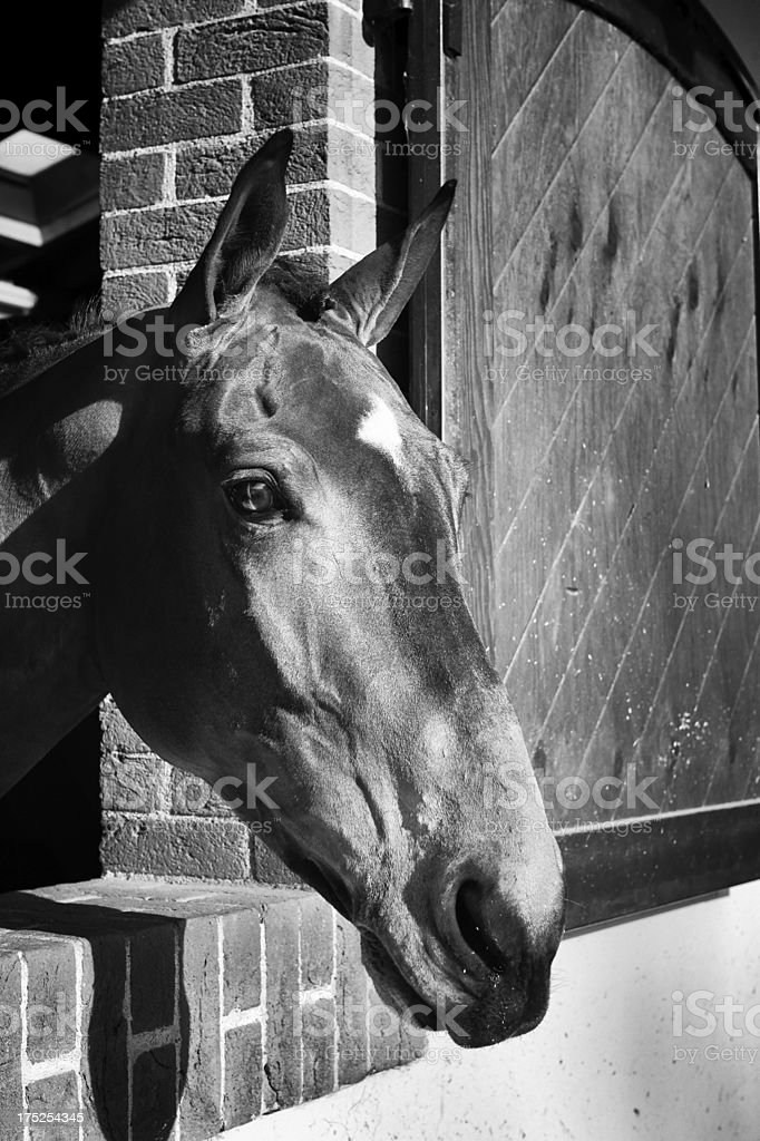 Horse in stable. Black and White royalty-free stock photo