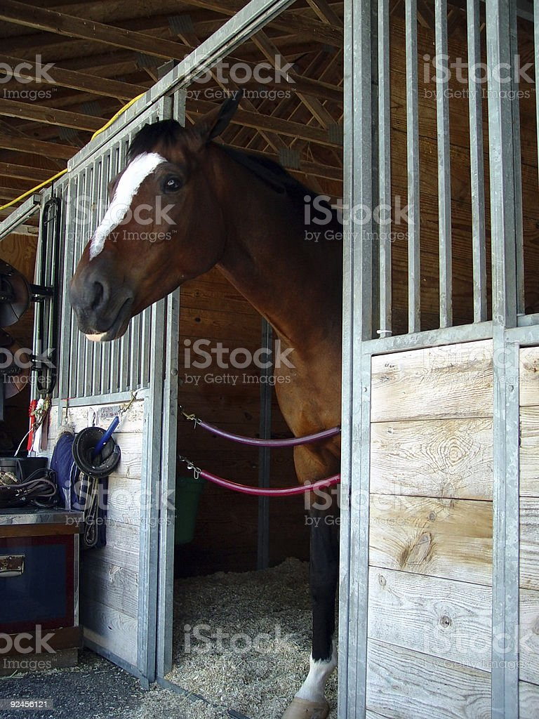 Horse in Stall royalty-free stock photo