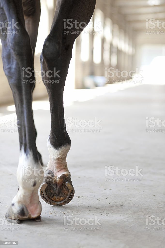 horse in stall stock photo