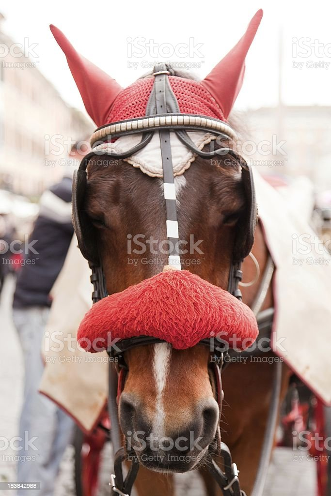 Horse in street with ornate head dress. Rome, Italy stock photo