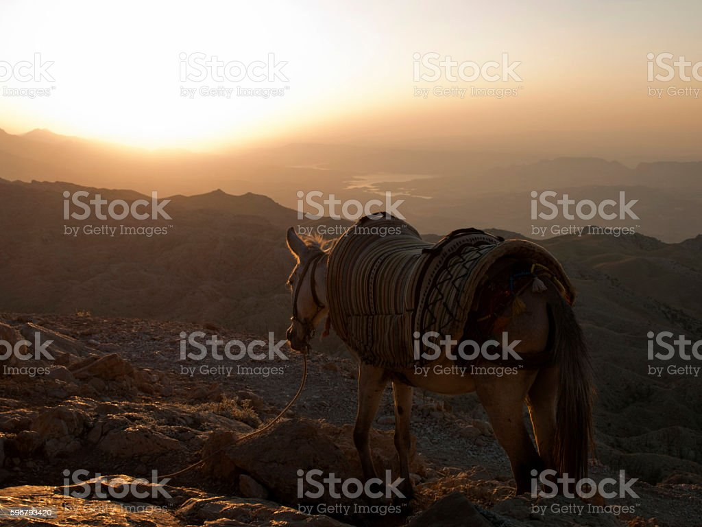 Horse in Sunrize stock photo