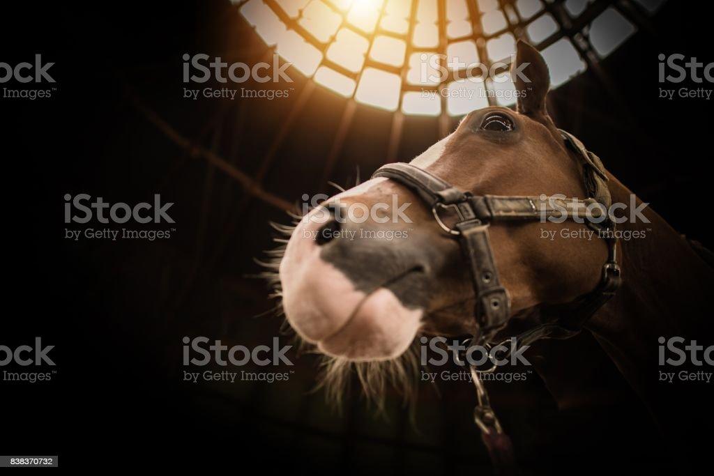 Horse in the Barn Closeup stock photo