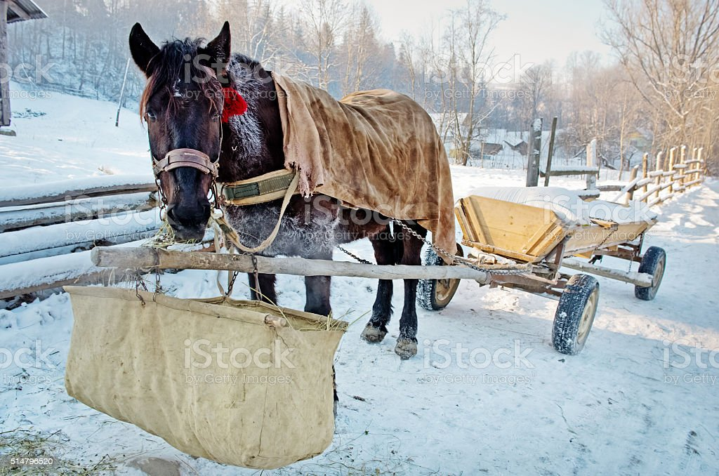 Horse in the Carpathian Mountains stock photo