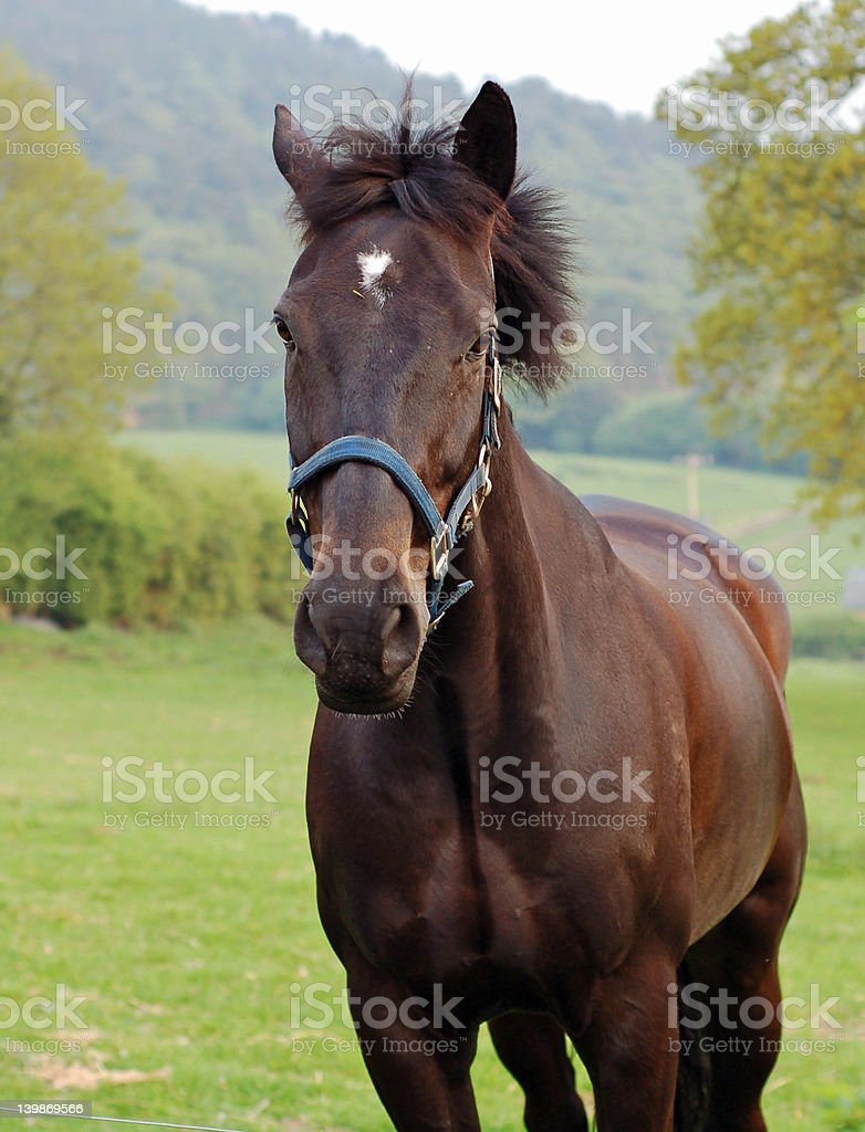 Horse In The Country 2 royalty-free stock photo