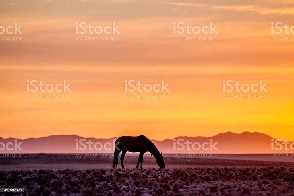 Horse in the desert at sunset stock photo