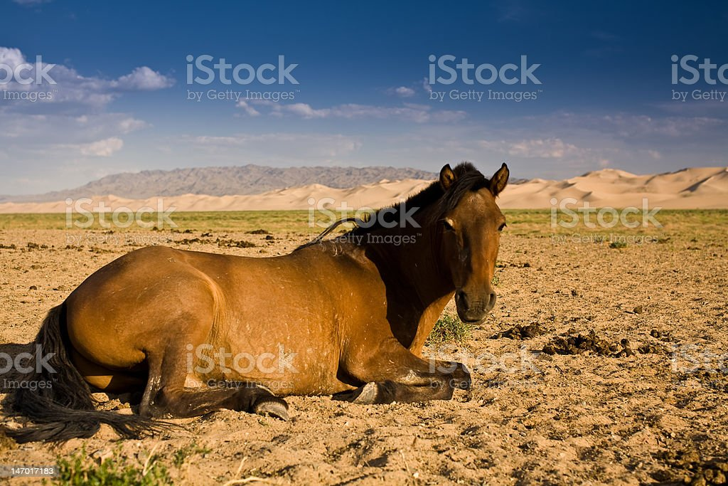 Horse in the desert royalty-free stock photo