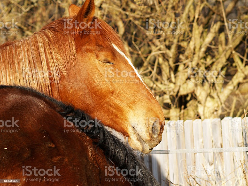 horse in the evening sun stock photo