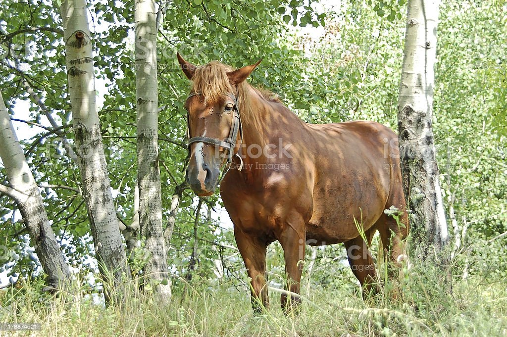 Horse in the forest royalty-free stock photo