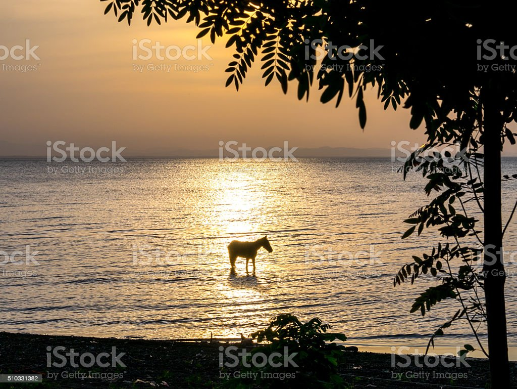 Horse in the Lake royalty-free stock photo
