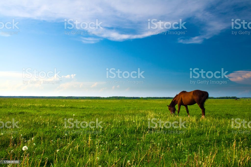 Horse in the meadow stock photo