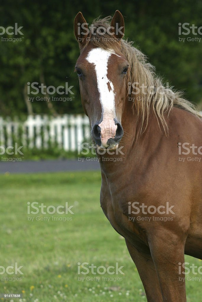 Horse in the New Forest of Hampshire, England royalty-free stock photo