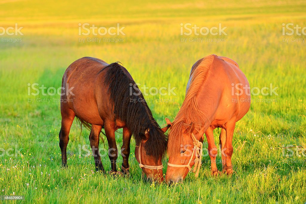 Horse in the pasture stock photo