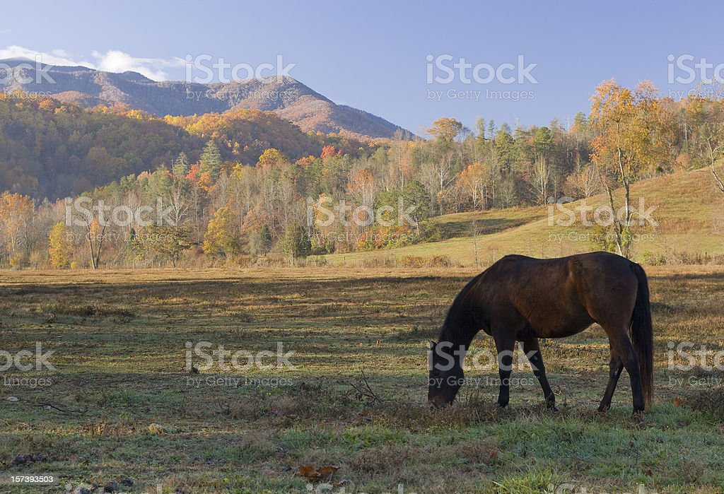 Horse in the Smoky Mountains royalty-free stock photo
