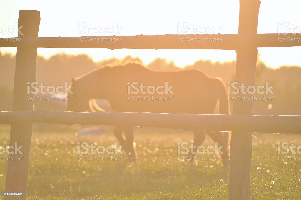 horse in the soft light of sunset stock photo