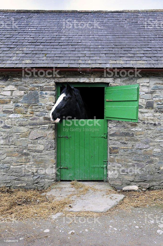 Pferd in der stabile Lizenzfreies stock-foto