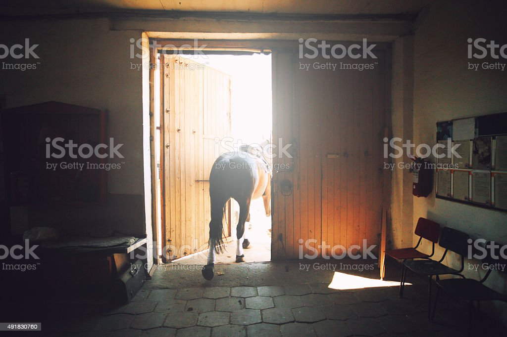 Horse in the stabling stock photo