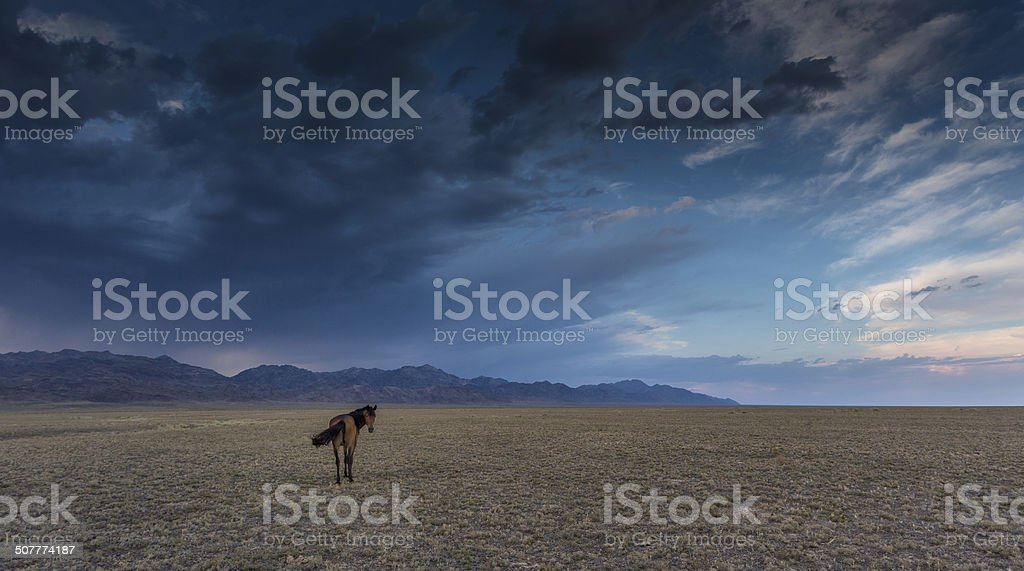 horse in the steppe stock photo