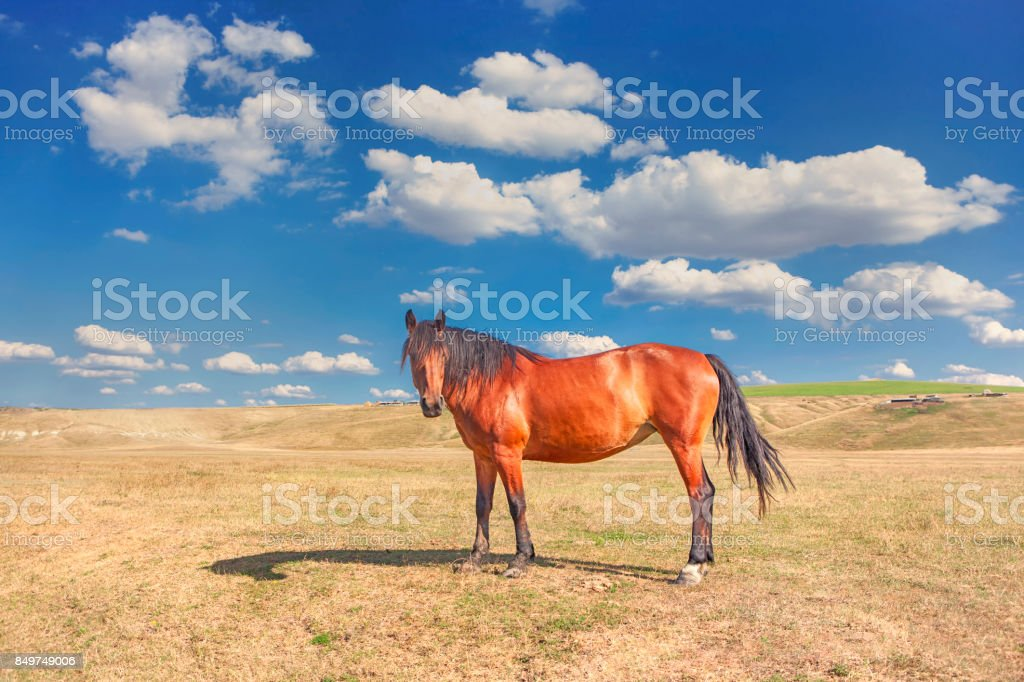 horse in the summer stock photo