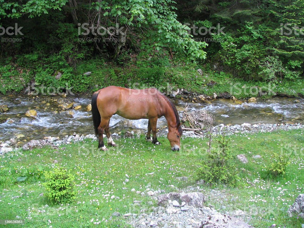 Horse in the wild stock photo
