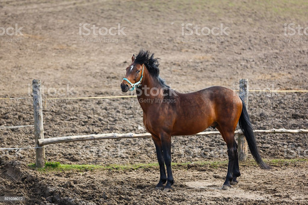 Horse in the wind stock photo
