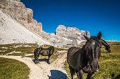 Horse in Tre Cime