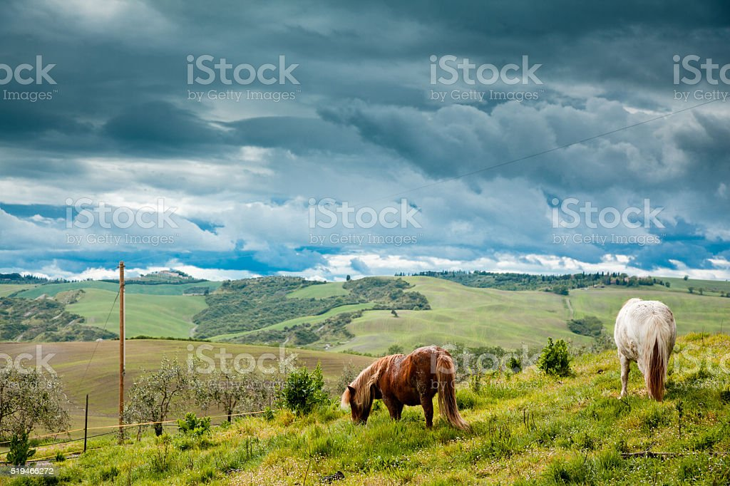 Horse in Tuscany stock photo