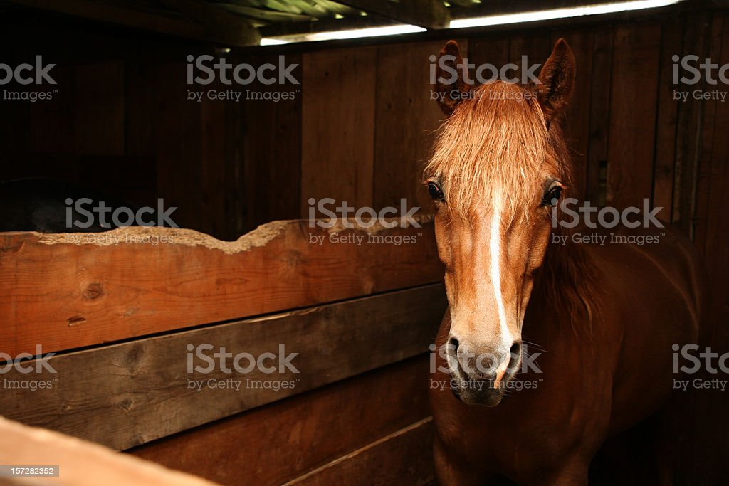 Horse in Wooden Stable stock photo