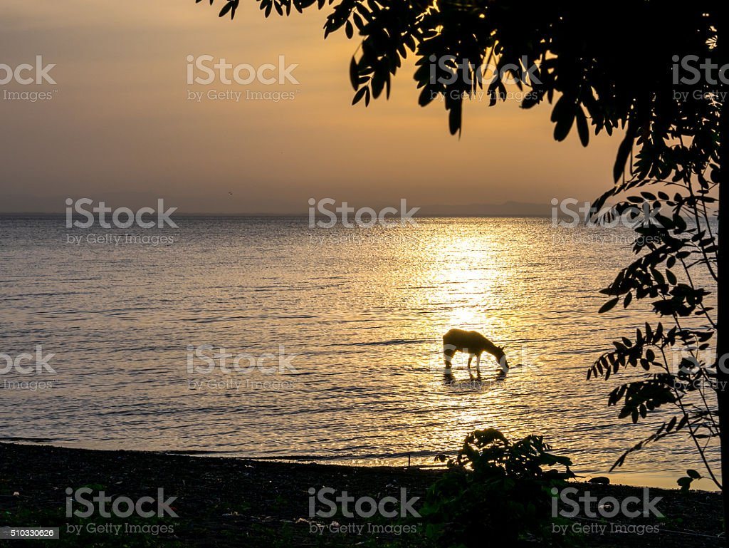 Horse is drinking water royalty-free stock photo