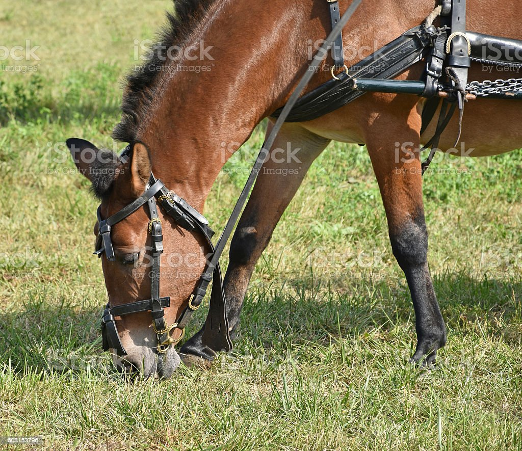 Horse is eating grass stock photo