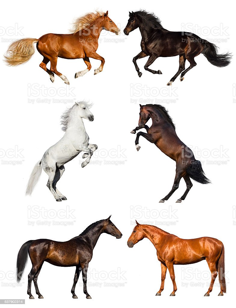 Horse isolated collection stock photo