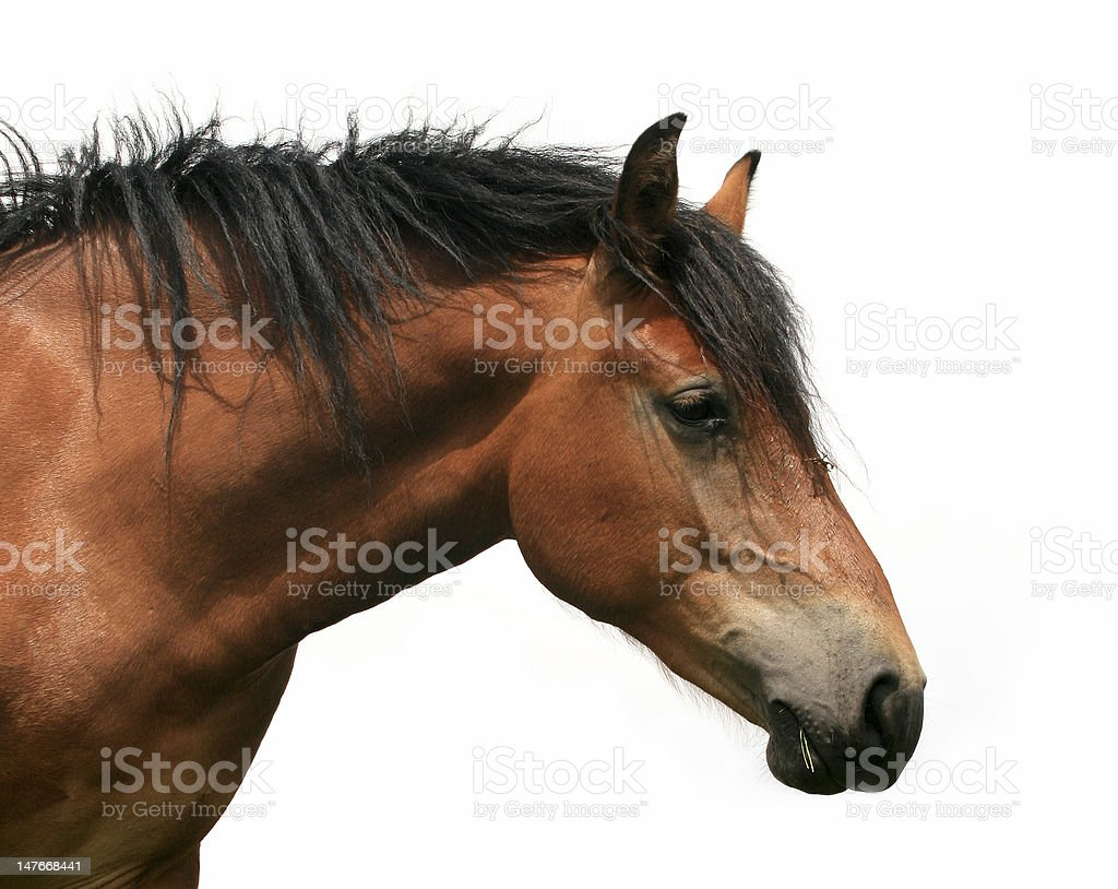 horse isolated stock photo