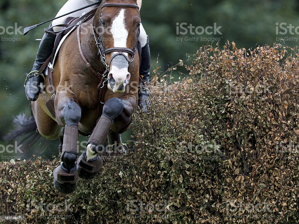 Horse Jumping a Hedge stock photo