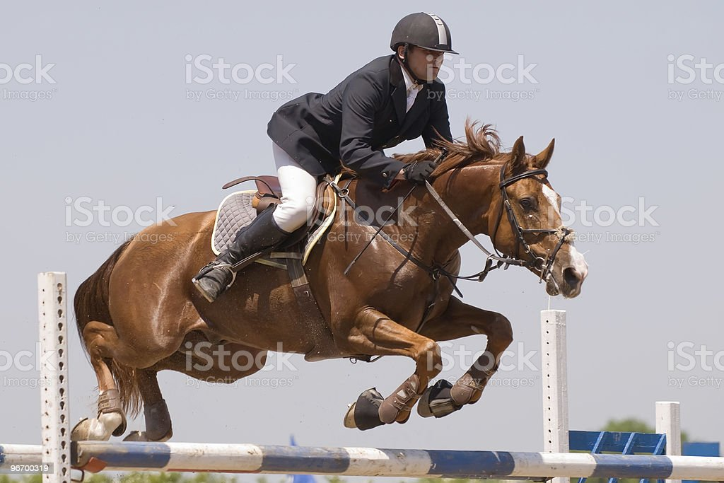 horse jumping show royalty-free stock photo