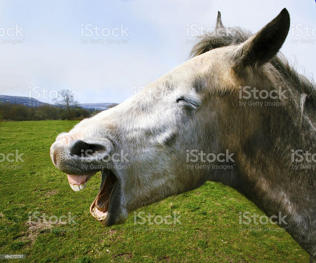 Horse Laughing stock photo