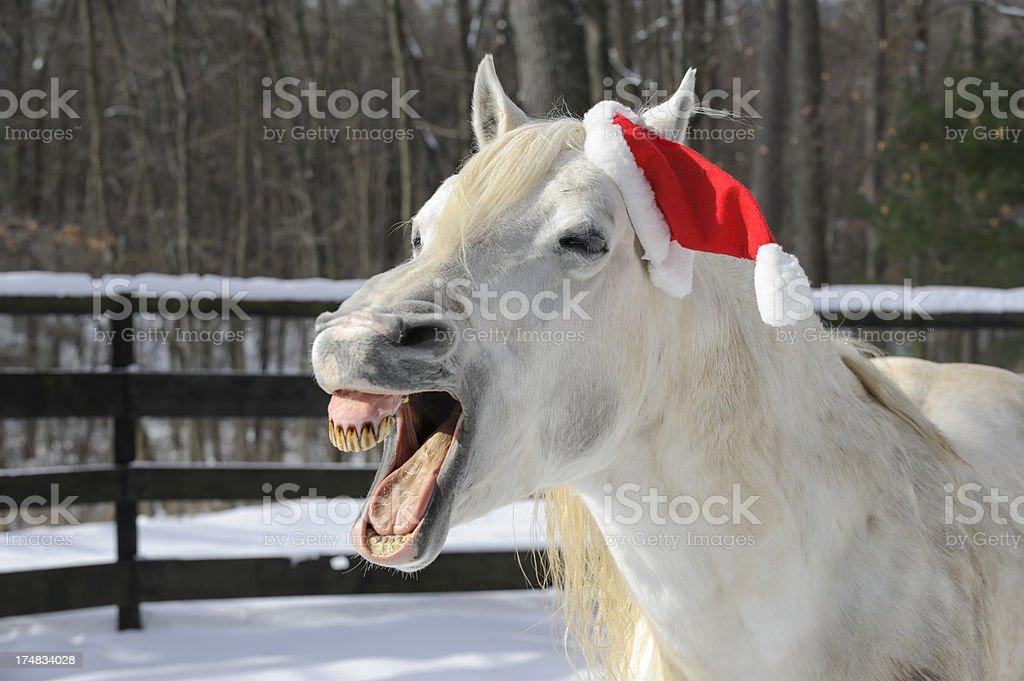 Horse Laughing Wearing Santa Christmas Hat stock photo