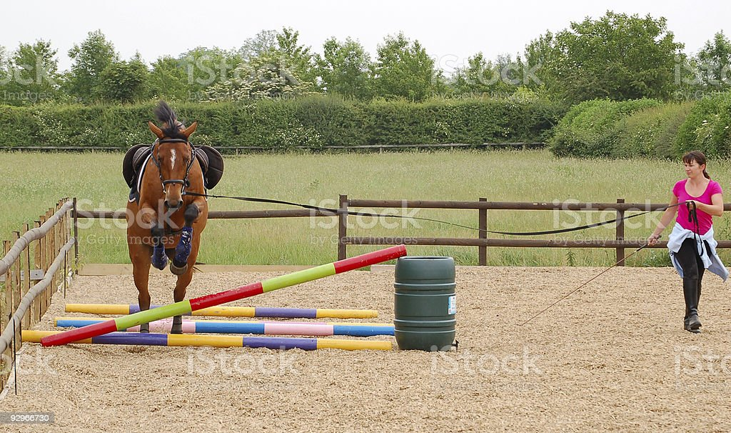 Horse learning to jump stock photo