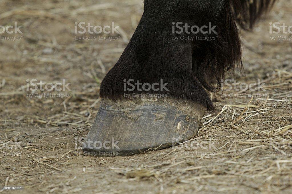 horse leg and hoof royalty-free stock photo