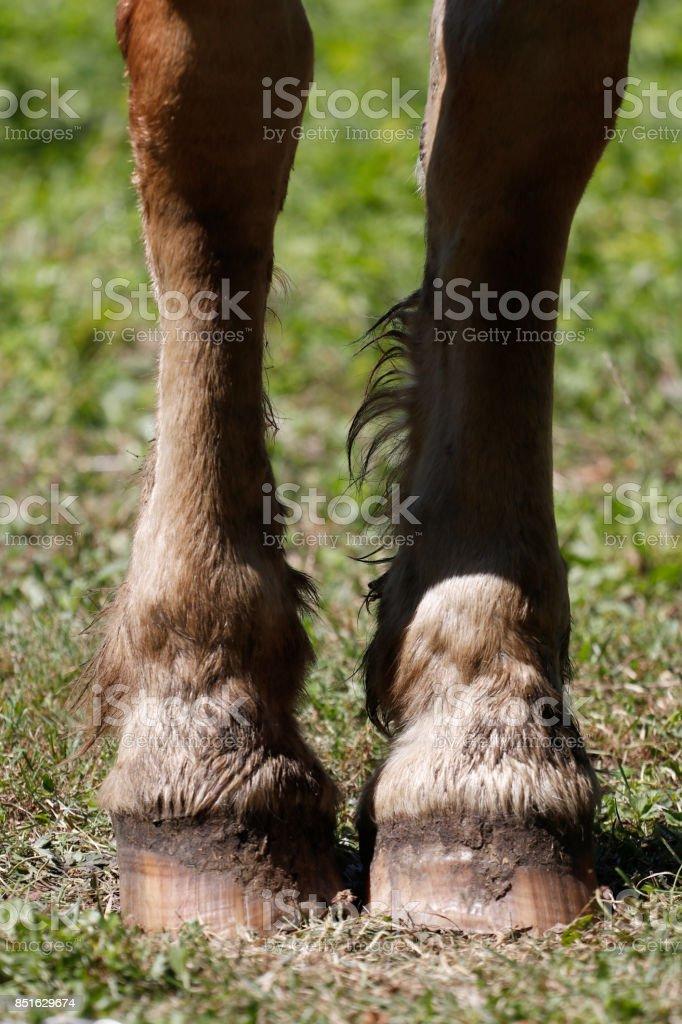 Horse leg stock photo